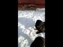 Собачки возле реабилитационного центра травматологии Белоозерск