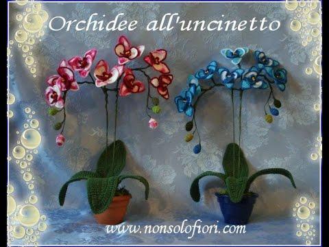 Orchidee alluncinetto