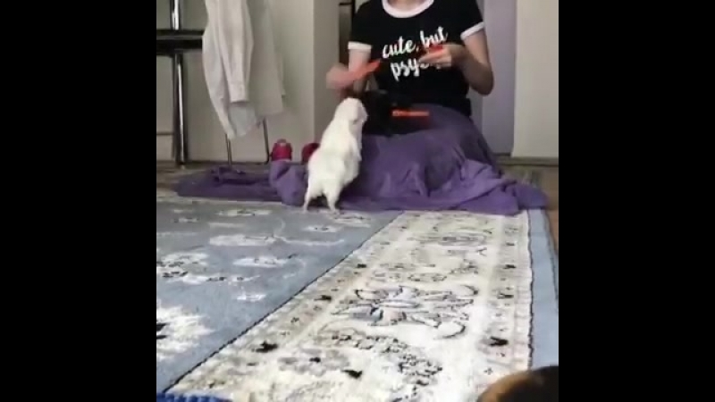 Woman Feeds Guinea Pigs Slices of Carrots 986185 1