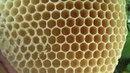 Колодное пчеловодство Часть 7 Почему исчезают пчелы ПРП Счастливое Молдова