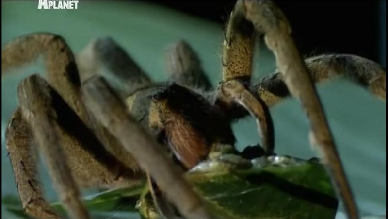 Войны жуков-гигантов / Monster bug wars 09