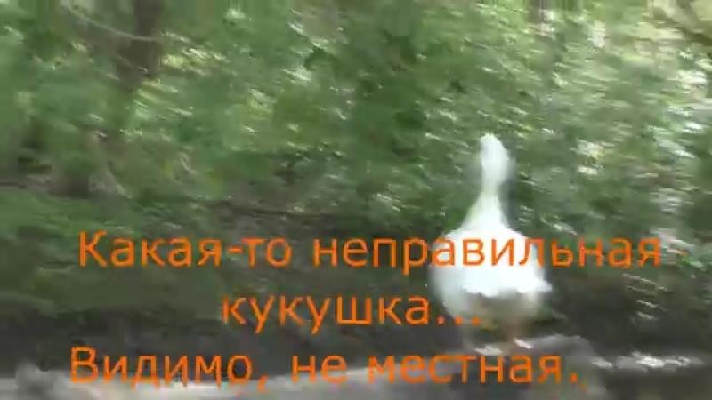 Сплав на байдарках по верховьям р Сок yaclip scscscrp