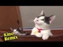логан 2017 фильмы Logan онлайн росомаха 3 пародия муви 43 смех ржач смешно до слез очень смешные коты приколы с животными.mp4