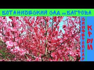 КРЫМ / СИМФЕРОПОЛЬ / Магнолии зацвели / Ботанический сад