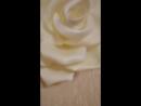Маленькая роза из изолона на стене