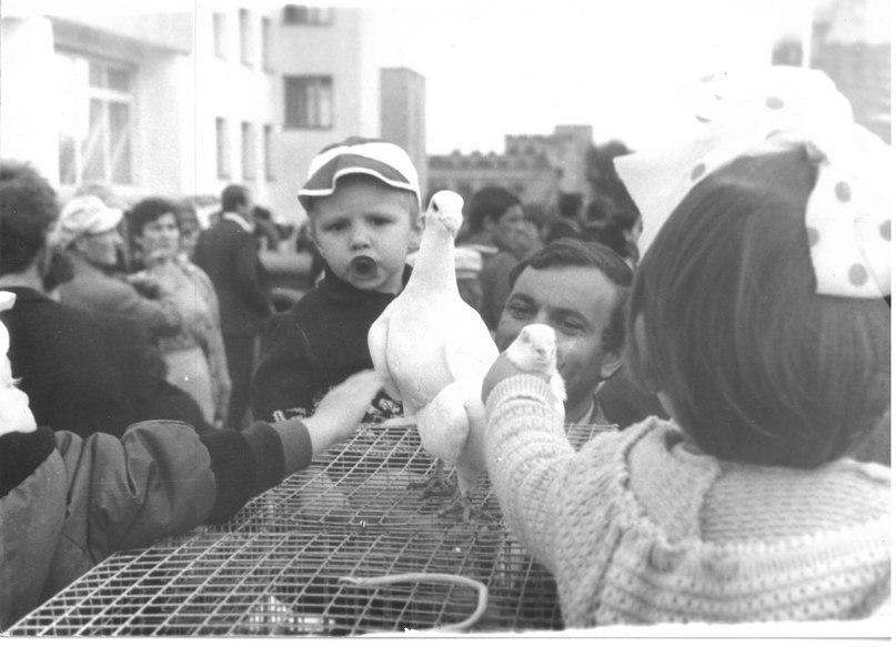 Выставка голубеводов Красноуфимска в рамках мероприятия «Дары уральской природы». Фото из архива С.А. Елисеева