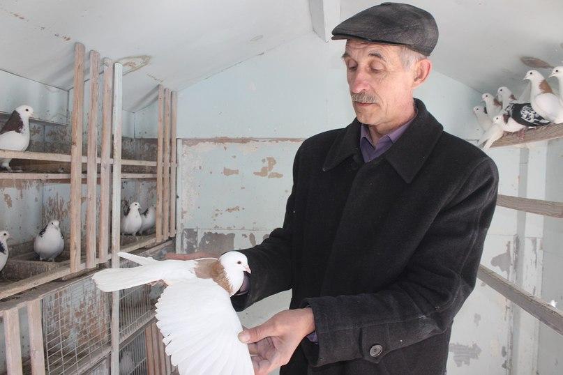 Сергей Александрович Елисеев и его голуби — пермские гривуны