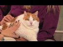 Anderson and Kristen Johnston Meet Meow, the 37-lb Cat