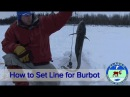 How to Set Line for Burbot