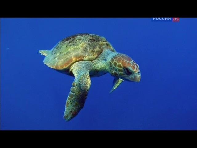 Дельфины - гепарды морских глубин