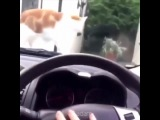 Cat Jumping from Horn to Marvin Gaye - Let's Get It On #coub