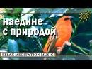 Видео природы Full HD на фоне красивой релакс музыки ❀