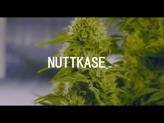 Nuttkase - Smell of Marijuana (Official Video) HD