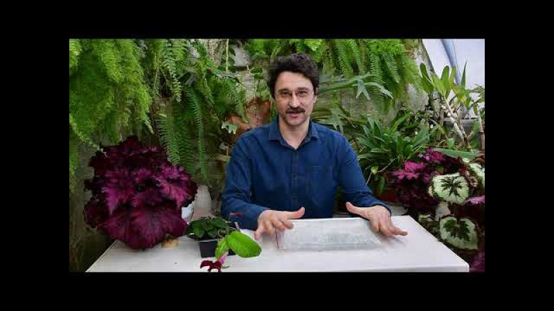 Транспортировка растений с теплоаккумулятором зимой