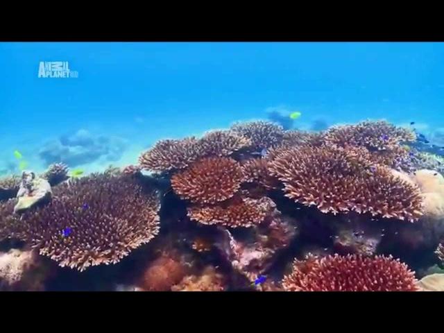 Чудеса голубой планеты - Африка xeltcf ujke,jq gkfytns - fahbrf