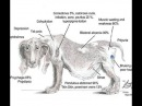 Основы диагностики и лечения гиперадренокортицизма синдрома Кушинга