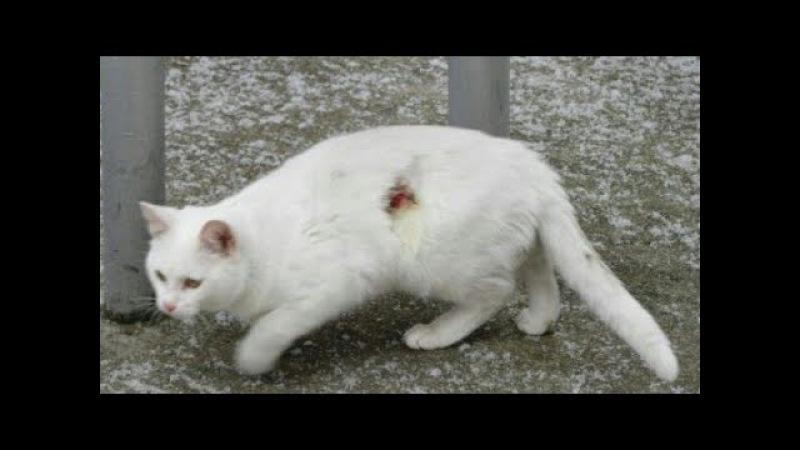 Белоснежный кот приблизился к людям, чтобы попросить еды… И за это получил пулю!