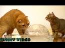 Котики, котята, прикольно, смешно, забавно, интересно-Cat, cat, price, funny, keep, interesting