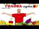 Голова садовая - ЭКСКЛЮЗИВ! Правильный посев моркови