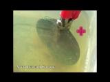 Чистка монет электролизом. Как создать установку для чистки электролизом.