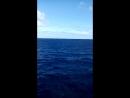 Паром Гран Канарья -- Тенерифе