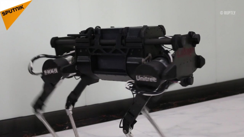 Çin'de yük çekebilen robot köpek geliştirildi