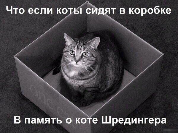 zT3g_Vgniic.jpg
