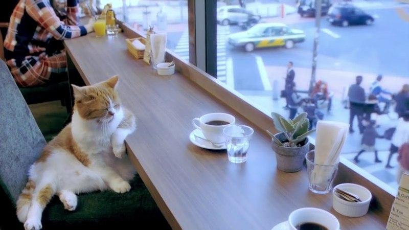 Кот в кафе