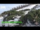 Пенсионер в Кемерово вырубил лесок пушистых елей ради наживы