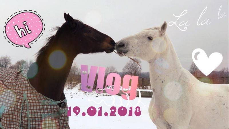 Очередной день с лошадьми! Пася нашел друга