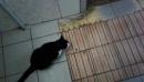черно-белый-умный кот или кошка