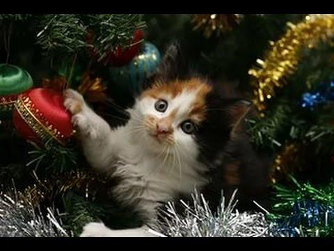 Прикольное видео с кошками!Кошки и Новогодняя Елка!Безобразники!