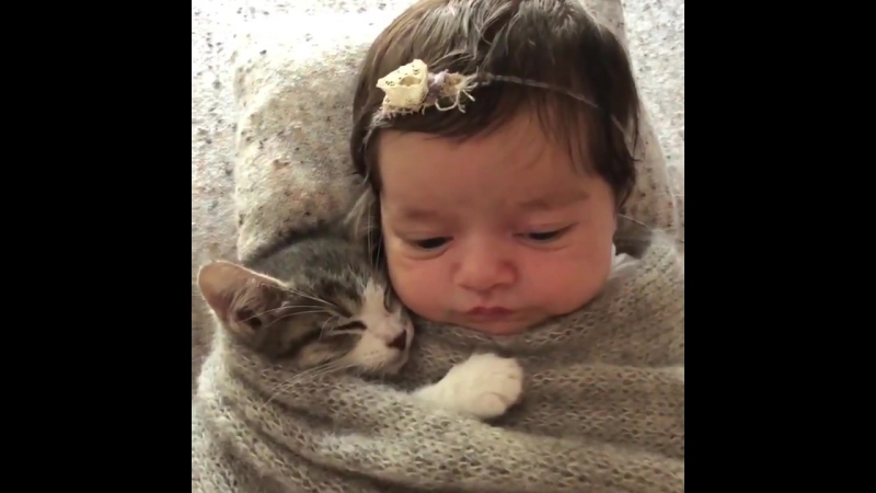Kitten and baby burrito - 977427