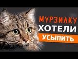 Как девушка сумела спасти жизни шестерым кошкам, которых ждало усыпление