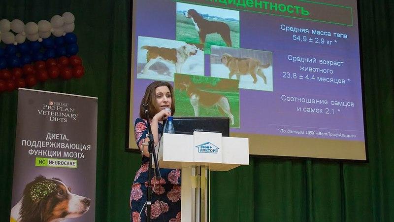 Сравнительная характеристика методов лечения собак с гигромой локтевого отростка