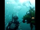 Елка под водой в Казани