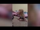 Девочку парализовало после укуса клеща