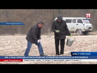 3,5 тысячи дубов посадили возле пещерного города Чуфут-Кале в Бахчисарайском районе