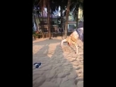 Video ae0c0fe32705bb48ff1289a2d3d1967a