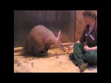 Training Aardvark at Zoo Saarbr