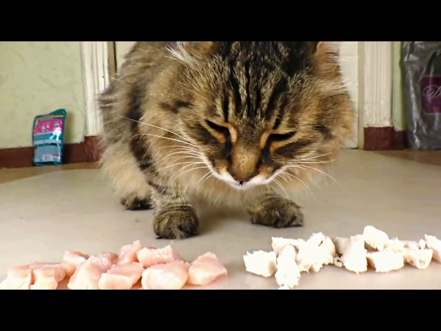 Raw or boiled chicken What does the cat like to eat