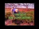 """Все секреты выращивания рассады томата от агрофирмы """"Агросемтомс"""""""