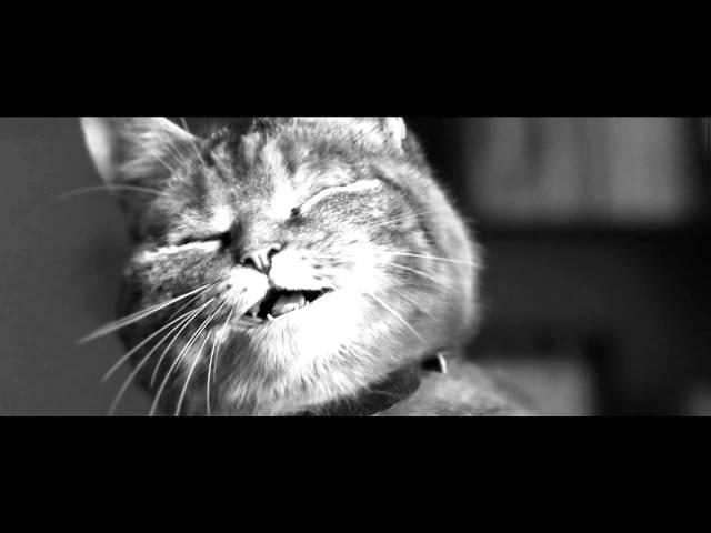 Maitre Cats - Tu vas me manquer