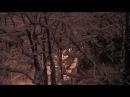 Ночной снежный сад