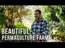 Beautiful 1-Acre Small Scale Permaculture Farm - Limestone Permaculture Farm