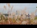 도시와 억새 The city and the Tremor La ciudad y la hierba