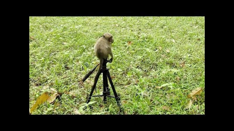 Amazing poor baby monkey sitting on the camera tripod, monkeys 1031 Tube BBC