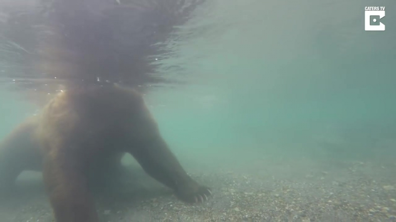 Bear catches a fish