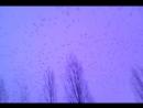 Птицы Хичкок.10.01.18.