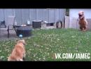 Собака против динозавра